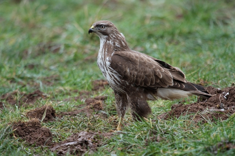 photo buse variable